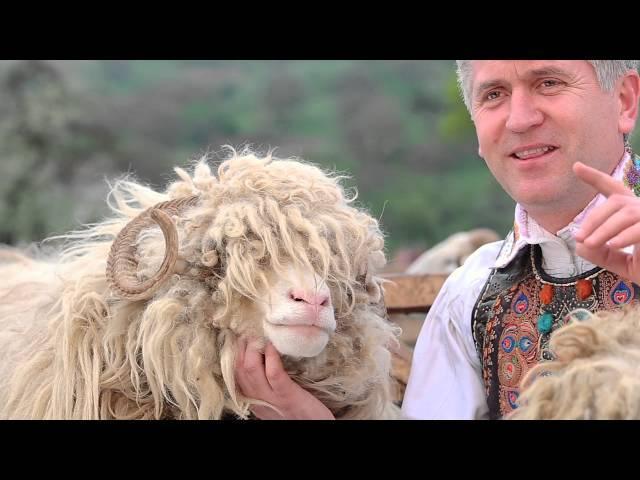Cristian Pomohaci - Dragi mi-s mie oile