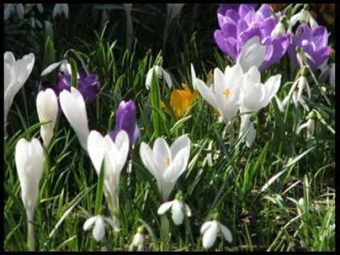 1 martie - o primăvară a sufletlui